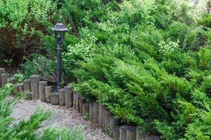 Add Some Magic With Garden Lighting Landscaping Austin