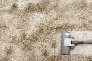 Removing Pet Stains carpet cleaning lancaster-pa